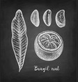 chalk sketch of brazil nut vector image