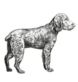 dog hunting hand drawn llustration vector image vector image