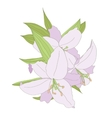 Lilies isolated on white background vector image vector image