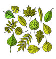 tree leaves colorful vector image vector image