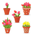collection of tulip planted in ceramic pots for vector image