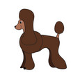 cute cartoon brown poodle isolated on white vector image vector image