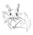 Hand sketch squirrel vector image vector image