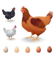 Realistic Hens in different breeds and eggs vector image vector image