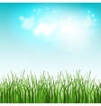 Green summer field with flowers and grass vector image