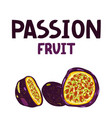 hand drawn purple passion fruit vector image vector image