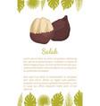 salak salacca palm tree exotic juicy fruit vector image