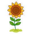 sunflower is in clearing vector image