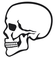 human skull profile vector image vector image