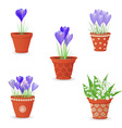 collection of lily of the valley and crocus vector image