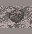 fossils vector image vector image