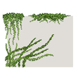 ivy on wall vector image vector image