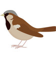 cartoon brown bird sparrow vector image vector image