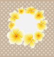 golden frangipani or plumeria flower on vector image
