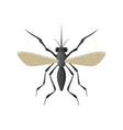 mosquito icon isolated on white background vector image vector image