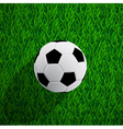 ball on the grass vector image vector image
