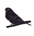 bird sitting on a branch silhouette vector image vector image