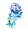 blue rose - watercolor hand painting artwork vector image vector image
