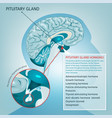 pituitary gland vector image vector image