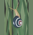 snail in grass vector image
