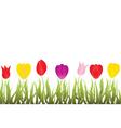 tulips garden vector image vector image