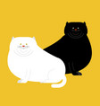 Fat white and black cat isolated big thick pet