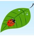 Ladybug on a leaf vector image
