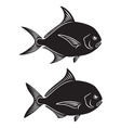 Pomfret Fish vector image vector image
