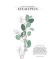eucalyptus floral watercolor art card template vector image