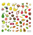 exotic tropical fruits hand drawn set collection vector image vector image