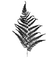 Fern silhouette Isolated on white background vector image vector image