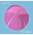 Flat design red cabbage vector image