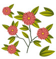 marigold flower plant in white background vector image