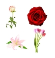 Realistic Flower Set High Quality vector image