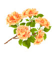branch yelow hibiscus tropical flowers vector image vector image
