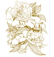 drawing peonies bouquet vector image vector image