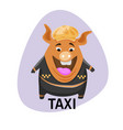 pig in a cap taxi driver pig on the background of vector image vector image