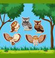 set of owl sticker vector image vector image