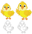 chicks on the white background vector image