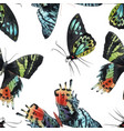 beautiful watercolor colorful butterflies vector image vector image