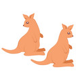cartoon kangaroo design vector image