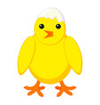 colorful cartoon chick with shell on head vector image vector image