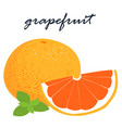 fresh organic grapefruit sweet and sour tasty vector image vector image