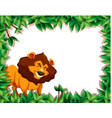 lion in nature frame vector image vector image