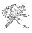 peony flower hand drawn in lines black and white vector image