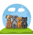 pet dogs and cats sitting with landscape image vector image vector image