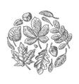 Set leaf vintage engraved vector image vector image