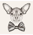 Sketch Toy Terrier with bow tie Hand drawn dog vector image