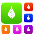 apple tree leaf set color collection vector image