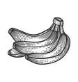 banana fruits sketch engraving vector image vector image
